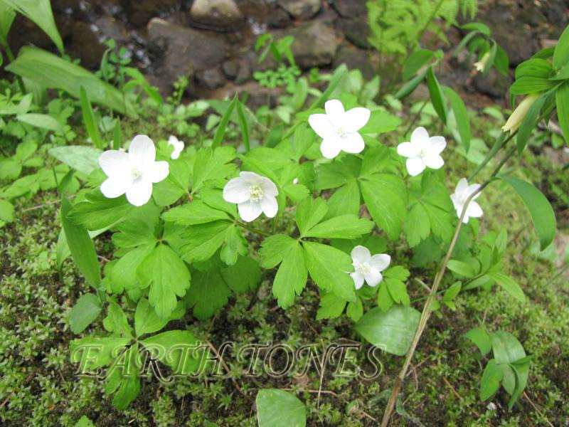 Earth Tones Native Plants Just Another Wordpress Weblog