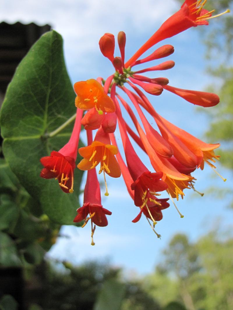 Earth Tones Native Plants – Just another WordPress weblog
