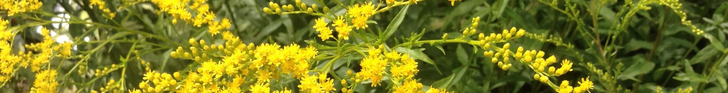 Earth Tones Native Plants