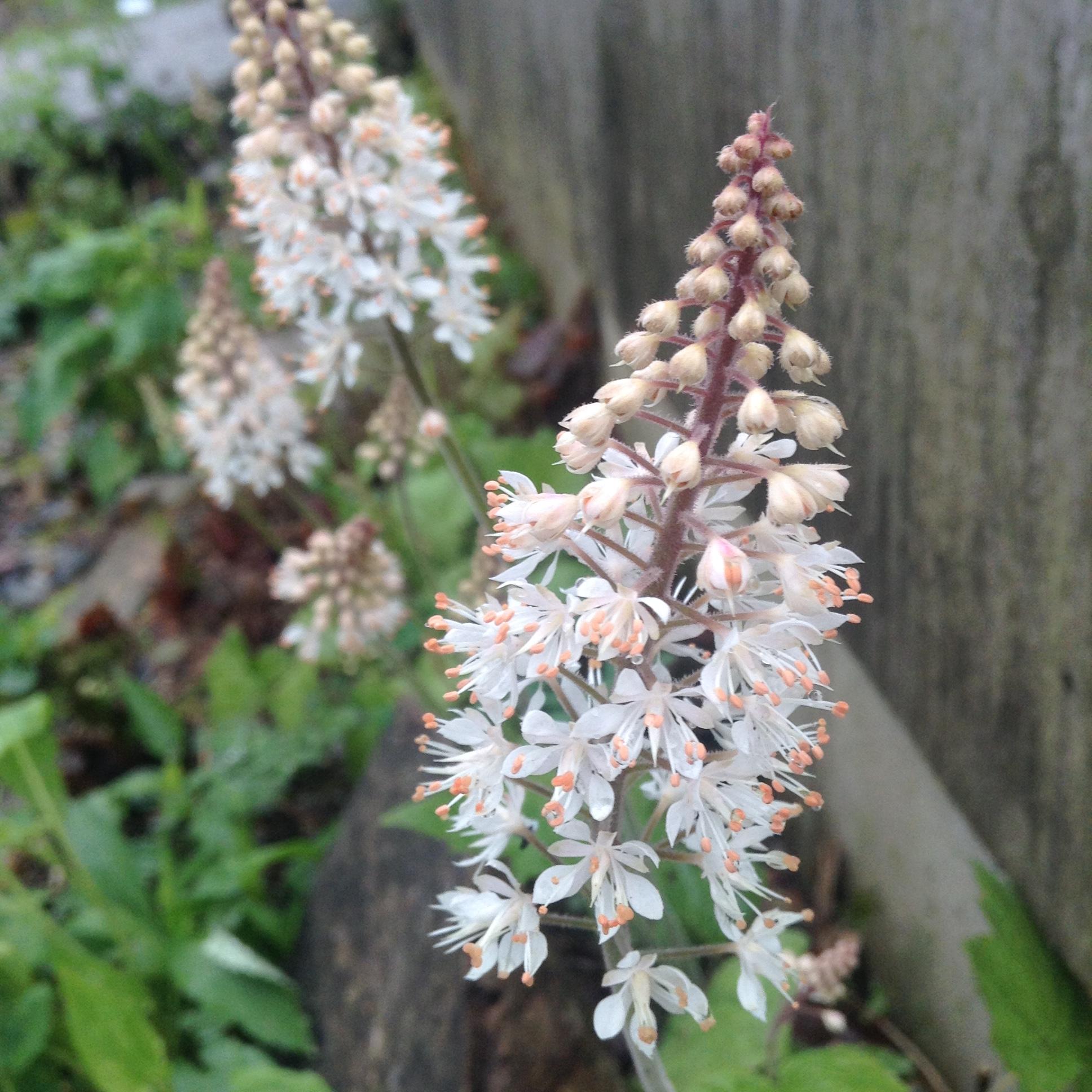 foam flower 5-7-16